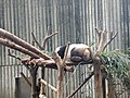 Chengdu Research Base of Giant Panda Breeding, 201907, 03.jpg