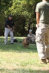 Cherry Point K-9 handlers keep dogs ready for war 110719-M-FL266-005.jpg