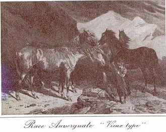 Auvergne horse - An engraving of Auvergne horses extracted from the report of the prefect of Puy de Dôme on the mounted service in 1873.