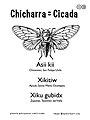 Chicharra = Cicada.jpg
