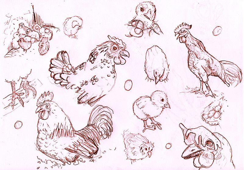 File:Chickensvxd.jpg