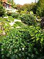 Chinese Garden in Sydney (26).jpg