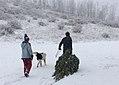 Christmas Tree - Bridger-Teton National Forest - December 2017.jpg