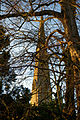 Church from Stoney Lane Thaxted Essex England.jpg