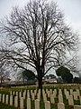 Cimitero militare Commonwealth - panoramio.jpg