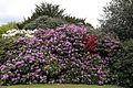 City of London Cemetery - flowering shrubs 01.jpg
