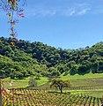 Clos la Chance Winery, Morgan Hill (I).jpg