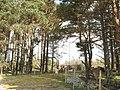 Coed Rhiwlas - geograph.org.uk - 406064.jpg