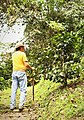 Coffee farm near Cachipay 04.jpg