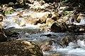 Cold, mountain stream in Rincon de la vieja (24284173619).jpg
