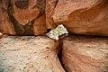 Colorado National Monument (627769da-e187-4d85-a268-51654e9a9f71).jpg