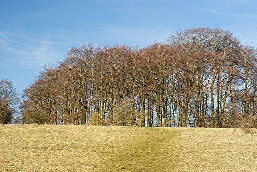 Copse on St.Catherine's Hill, Winchester - geograph.org.uk - 1736477