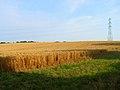 Cornfield, near Gurrs Farm - geograph.org.uk - 210077.jpg