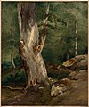 Corot - Old Beech Tree, about 1828–30.jpg