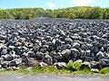 Coulée de lave de Roquelaure P1080532.jpg