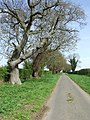 Country road - geograph.org.uk - 778165.jpg