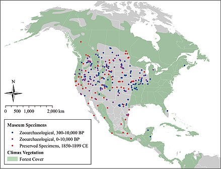 Coyote expansion over the past 10,000 years Coyote expansion past 10,000 years.jpg