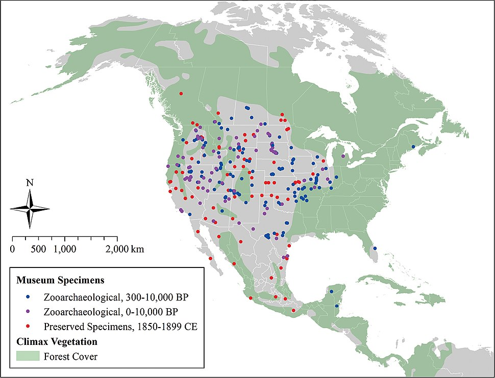 Coyote expansion past 10,000 years