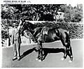 Cranbrook (private residence 1859-1900, residence of the NSW Governor 1900-1917, now Cranbrook School) - horse on parade, Bellevue Hill (NSW) (8432138128).jpg