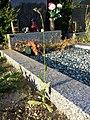 Crepis pulchra sl56.jpg
