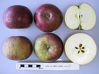 Cross section of Cox La Vera, National Fruit Collection (acc. 2000-120).jpg