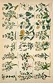 Culpeper's complete herbal BHL4747054.jpg