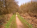 Cycle Track, Forest of Dean. - geograph.org.uk - 384187.jpg