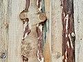 DP2Q9530 Birch-Board Fence on Nekrasova Street (45149411165).jpg
