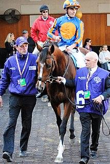 Clemmie Irish-bred Thoroughbred racehorse
