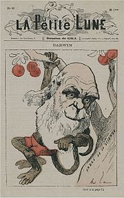 A common caricature of Charles Darwin focuses on his beard, eyebrows, and baldness, while often giving him the features of an ape or monkey.