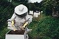 Deans Court beekeeper (Unsplash).jpg
