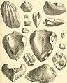 Denkschriften der Kaiserlichen Akademie der Wissenschaften, Mathematisch-Naturwissenschaftliche Classe (1885) (20666262048).jpg