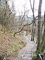 Descending through Laggan Wood on the circular walk - geograph.org.uk - 745886.jpg