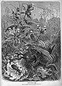 Die Gartenlaube (1873) 133.JPG