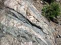 Dikes intruding tillite (Nipissing Diabase & Gowganda Formation, Paleoproterozoic; Percival Lake roadcut, Ontario, Canada) 20 (47728199861).jpg