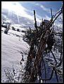 Dimri.jpg