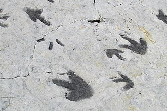 Dinosaur Ridge - Dinosaur Tracks at Dinosaur Ridge, Morrison Fossil Area National Natural Landmark, Colorado.