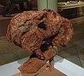 Dinodontosaurus skull.jpg