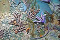Diorama of a Devonian seafloor 2 (44899108654).jpg
