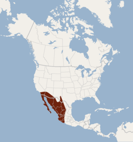 Distribution of Nyctinomops femorosaccus.png
