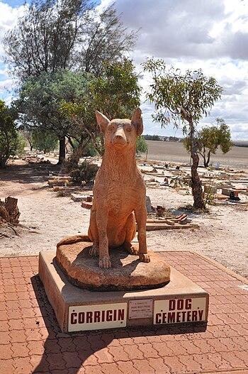 English: Corrigin dog cementery