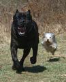 Dog size variation.png