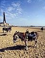 Donkeys at Blackpool - geograph.org.uk - 1734515.jpg