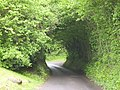 Dorset country lane - geograph.org.uk - 465678.jpg