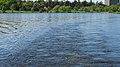 Dows Lake, Ottawa (492018) (9450540076).jpg