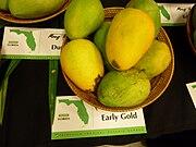 Earlygold mango.JPG