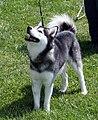 Echo-standard-male-akk-2007.jpg