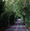 Eine für Irland charakteristische Landstraße.jpg