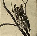 Elementary zoology (1902) (21045536770).jpg