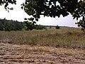 Endine NL lasketiir Jõe(Püti) juures,Kõruse - 2013-07-26 10.43.37 - panoramio.jpg